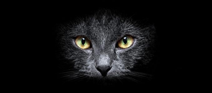 Alertas sobre furtos de energia (gatos)