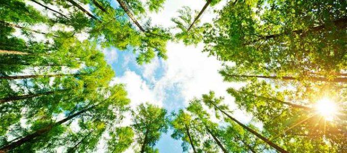 Cemirim revisa seu Guia de Arborização – Saiba mais