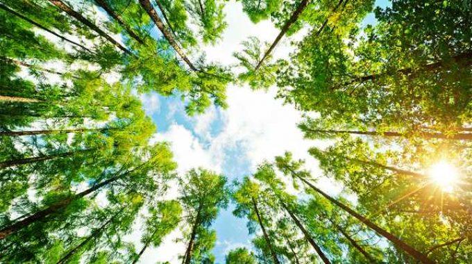 Guia Arborização